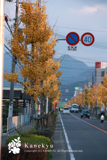 20101129b.jpg
