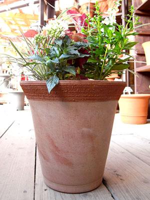 0523寄植え鉢.jpg