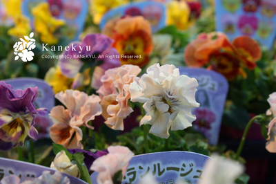 20091115f.jpg