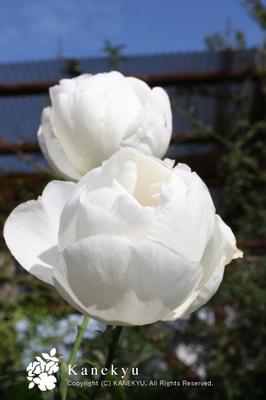 20091121p.jpg