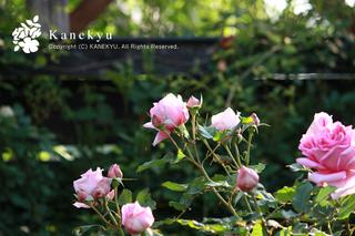 20110509b.jpg