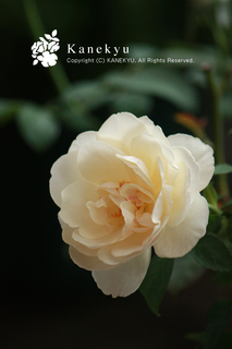 20110921a.jpg