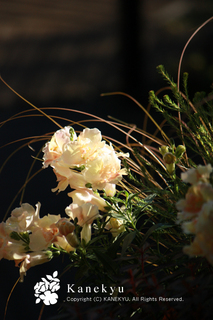 20111031a.jpg